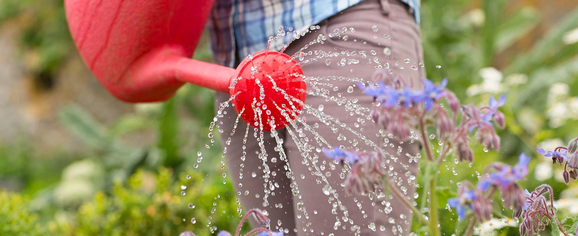 Gardeners Freezywater